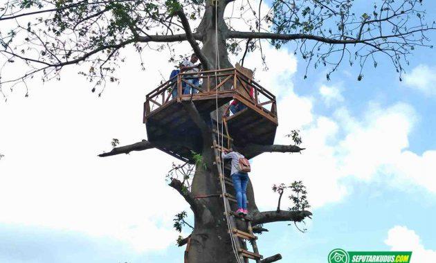 Pohon di Bukit Nggeneng, Rahtawu 2017_6_4